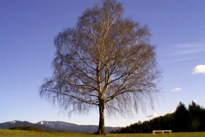 Gmajna, Slovenj Gradec